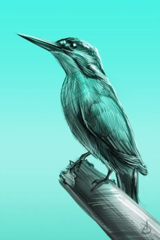 24/365 - kingfisher by h1fey