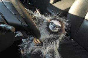 Sloth drives your car by mooki003