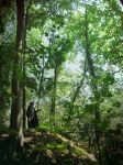 Sunlight in Mirkwood by Carancerth
