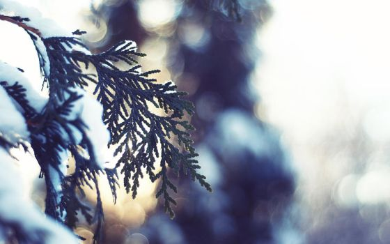 Winter Light - Wallpaper by solefield