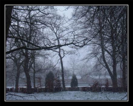 Frosty Afternoon by ts2master