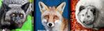 Colourful FOX mug by woxys