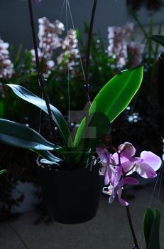 CBG 2012 Orchid Show 5 by AmberPalette