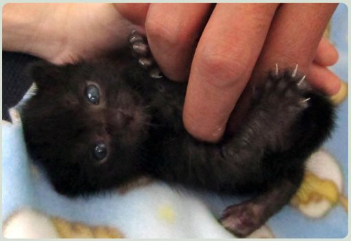 Little kitty 15 days old by Talty