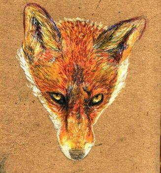 Fox Colored Pencil by your-friendly-nukes