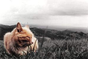 cat and the sky by Huitanot
