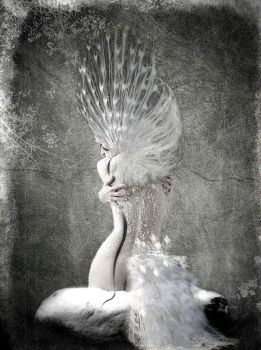 White Peacock by owel