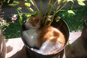 A real GreenThumb by cocki1