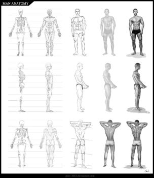 Anatomy favourites by WushuSpice on DeviantArt