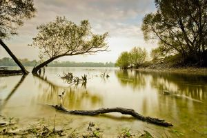 silent scape III by arbebuk