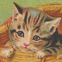 Loveable Kitten (stock) by linux-rules